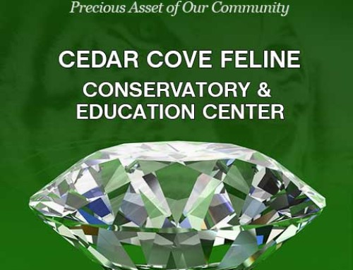 Louisburg Jewel – Cedar Cove Feline Conservatory and Education Center