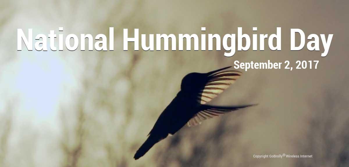 National Hummingbird Day GoBrolly Wireless
